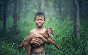 Fotos Asiatische Jungtiere Hausziege Ziegen Gras Junge Starren Kinder