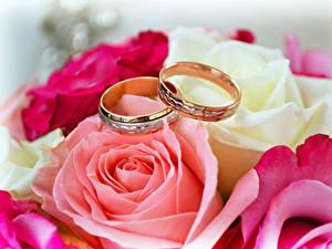 Fotos Rosen Großansicht Ring Zwei Gold Farbe Blumen