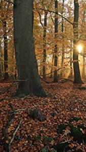 Fotos Niederlande Park Herbst Bäume Blattwerk Lichtstrahl Laubmoose Het Lankheet