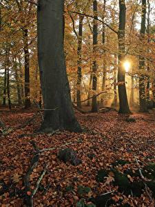 Picture Netherlands Parks Autumn Trees Foliage Rays of light Moss Het Lankheet