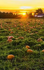 Desktop hintergrundbilder Kanada Sonnenaufgänge und Sonnenuntergänge Acker Kürbisse Viel British Columbia Natur