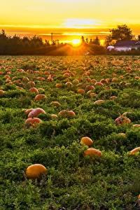 Wallpaper Canada Sunrises and sunsets Fields Pumpkin Many British Columbia Nature