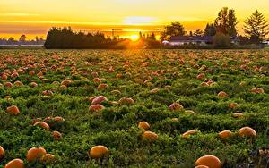 Wallpaper Canada Sunrises and sunsets Fields Pumpkin Many British Columbia Nature