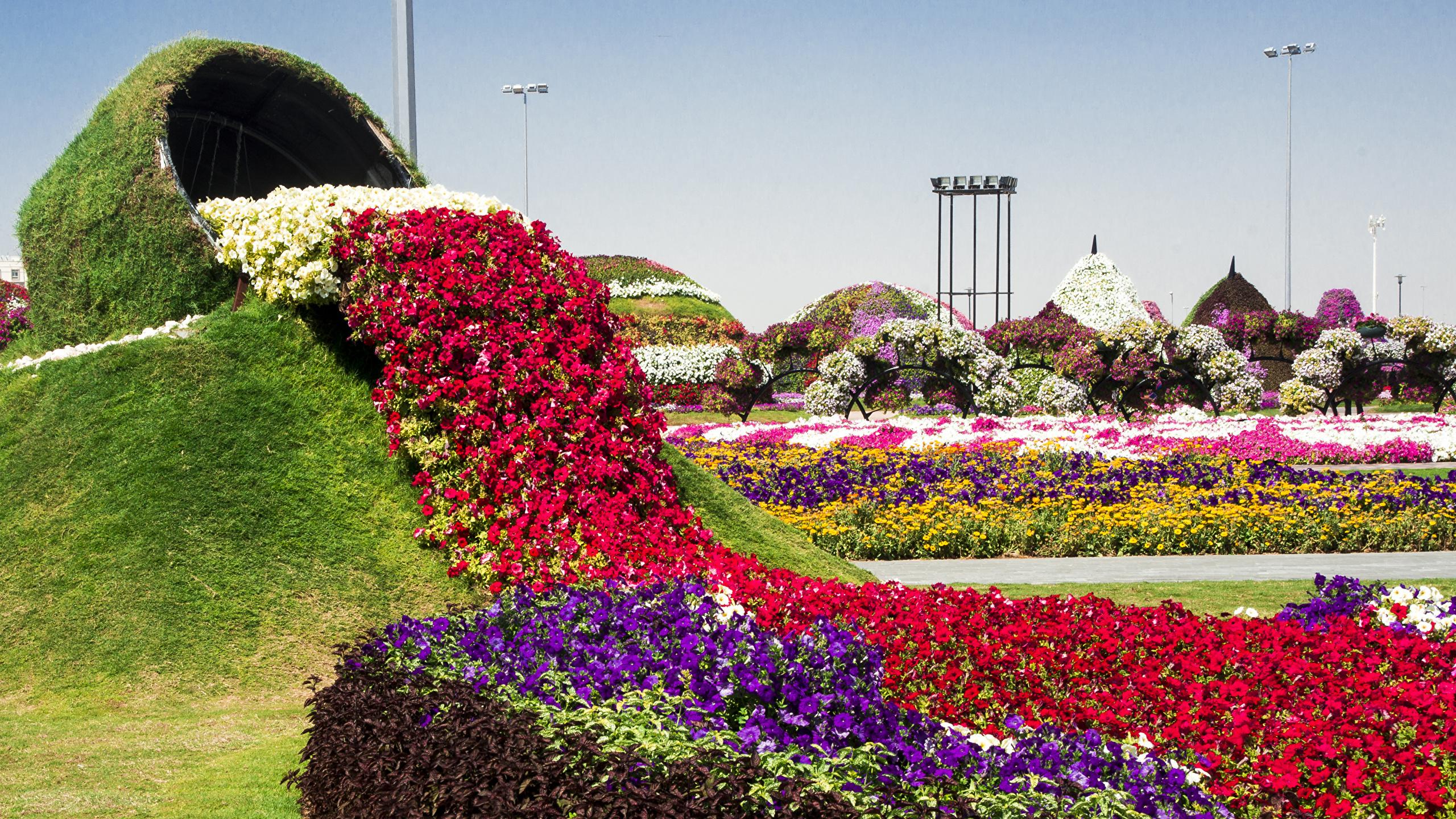 Photos Dubai Miracle Garden Nature Petunia Gardens Design 2560x1440