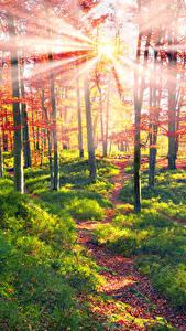 Fotos Ukraine Wälder Herbst Transkarpatien Bäume Lichtstrahl Gras Weg