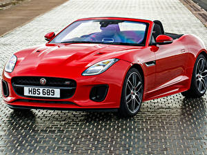 Fotos Jaguar Cabrio Rot Metallisch 2018-19 F-Type  Chequered Flag  Convertible Autos