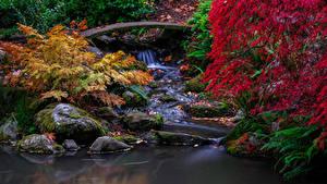 Fotos USA Seattle Park Herbst Wasserfall Steine Laubmoose Blattwerk Ast Kubota Gardens