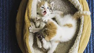 Image Cats Kitty cat 2 Cute animal
