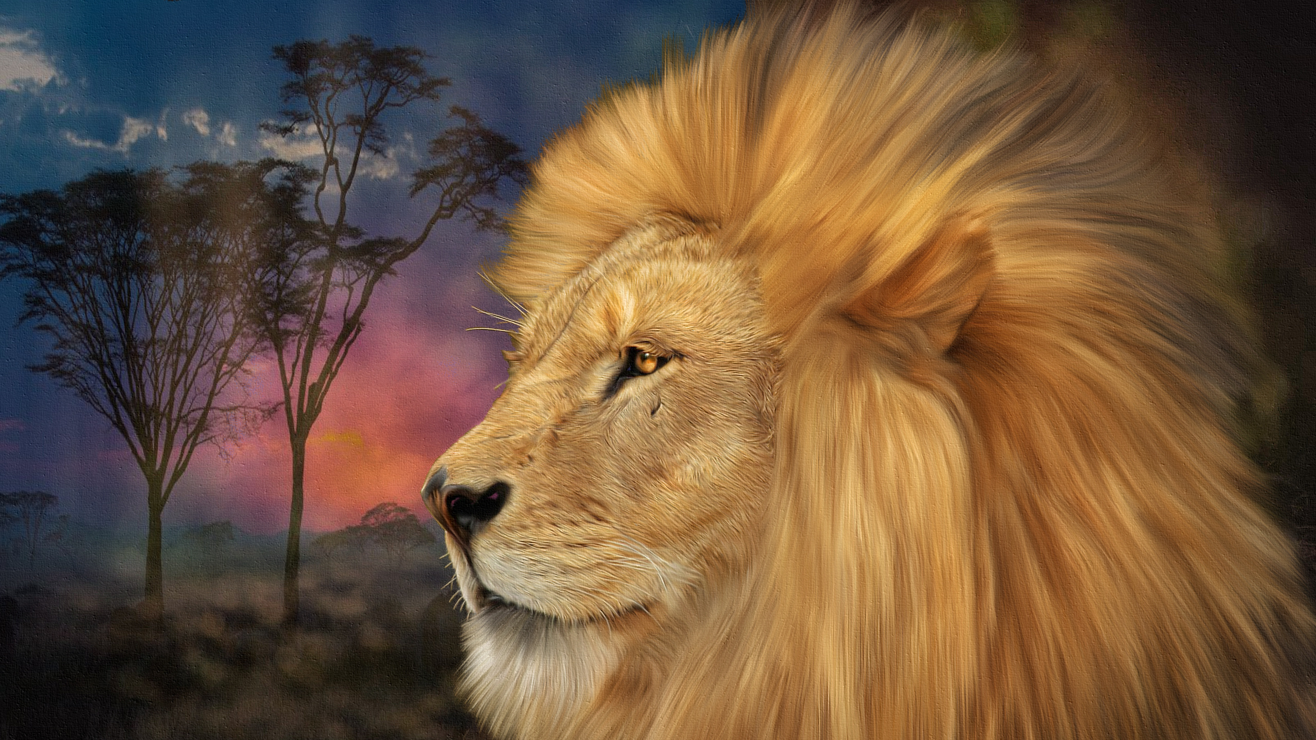 Fonds Decran 2560x1440 Fauve Lions Tête Animaux Télécharger