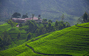 Bilder Sri Lanka Landschaftsfotografie Acker Haus Hügel Bäume