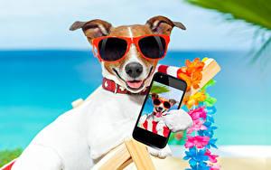 Hintergrundbilder Hunde Jack Russell Terrier Smartphone Brille Blick Tiere