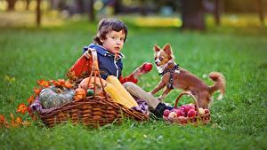 Hintergrundbilder Herbst Äpfel Hunde Weidenkorb Gras Junge Sitzt Kinder