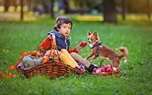 Hintergrundbilder Herbst Äpfel Hunde Weidenkorb Gras Junge Sitzend Kinder