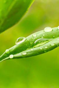 Bilder Pflanzen Hautnah Makro Tropfen Blattwerk