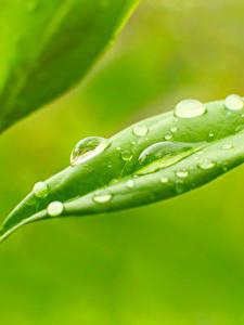 Bilder Pflanzen Hautnah Makro Tropfen Blattwerk Natur