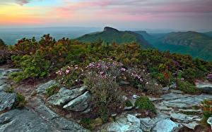 Fotos Vereinigte Staaten Gebirge Steine Strauch Avery North Carolina Natur