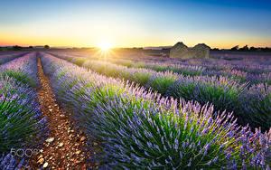 Fotos Lavendel Felder Sonnenaufgänge und Sonnenuntergänge Frankreich Sonne Lichtstrahl Natur