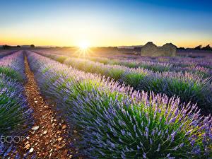 Fotos Lavendel Felder Sonnenaufgänge und Sonnenuntergänge Frankreich Sonne Lichtstrahl