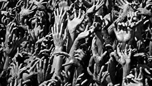 Hintergrundbilder Viel Hand Schwarzweiss