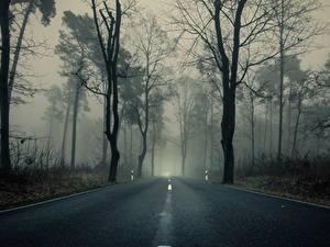 Fotos Wälder Straße Bäume Nebel Asphalt Natur