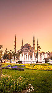 Fotos Türkei Tempel Park Springbrunnen Tulpen Sultan-Ahmed-Moschee Istanbul Moschee Bäume Rasen Städte