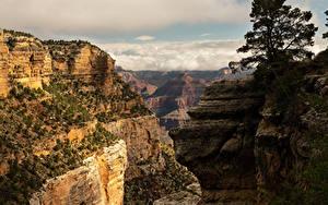 Fotos Vereinigte Staaten Grand Canyon Park Park Gebirge Canyon Natur