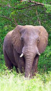 Bilder Elefanten Tiere