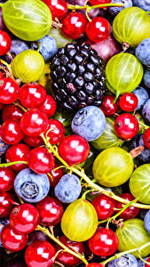Pictures Berry Blackberry Currant Blueberries Gooseberry Food