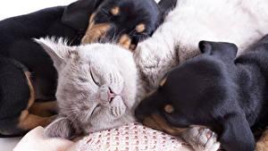 Image Dogs Cat Three 3 Sleep Pretty animal