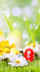 Fotos Ostern Feiertage Kamillen Eier Tropfen