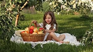 Hintergrundbilder Äpfel Kleine Mädchen Braune Haare Sitzt Weidenkorb Kinder
