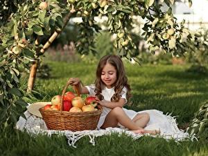Hintergrundbilder Äpfel Kleine Mädchen Braune Haare Sitzt Weidenkorb