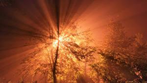 Fotos Morgendämmerung und Sonnenuntergang Himmel Lichtstrahl