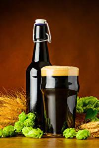 Fotos Bier Weizen Echter Hopfen Flasche Trinkglas Schaum Ähre Lebensmittel