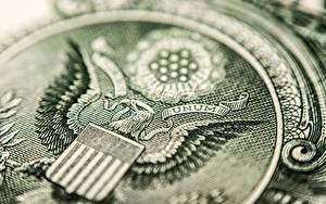Hintergrundbilder Nahaufnahme Adler Dollars Makrofotografie