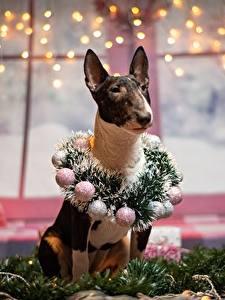 Fotos Neujahr Hund Bullterrier Kranz Kugeln Lichterkette ein Tier