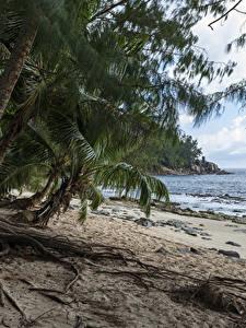 Hintergrundbilder Tropen Küste Palmengewächse Strände Police Beach Seychelles Natur