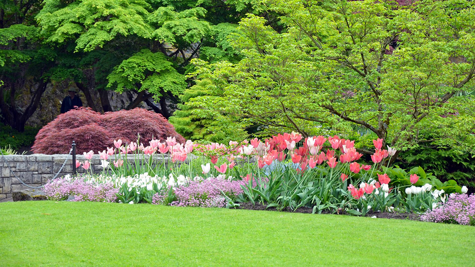 壁紙 19x1080 春 チューリップ 公園 自然 ダウンロード 写真