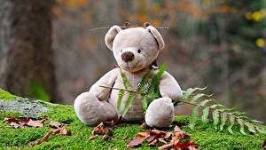 Bilder Teddybär Laubmoose Sitzt