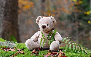 Bilder Teddybär Laubmoose Sitzend