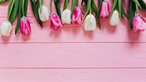 Fotos Tulpen Bretter Blumen
