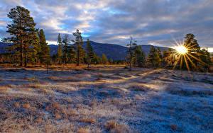 Fotos Winter Sonnenaufgänge und Sonnenuntergänge Gebirge Bäume Gras Sonne Natur