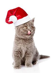 Bilder Neujahr Katzen Weißer hintergrund Katzenjunges Mütze Zunge