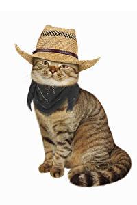 Fotos Katze Weißer hintergrund Der Hut Blick Sitzend Tiere
