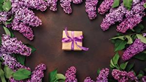 Hintergrundbilder Syringa Geschenke Violett Blumen