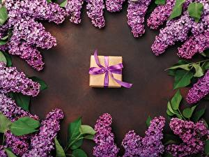 Picture Syringa Gifts Violet Flowers