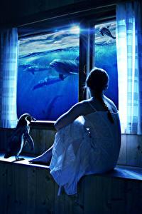 Fotos Delfine Pinguine Kreativ Sitzend Fenster Fantasy