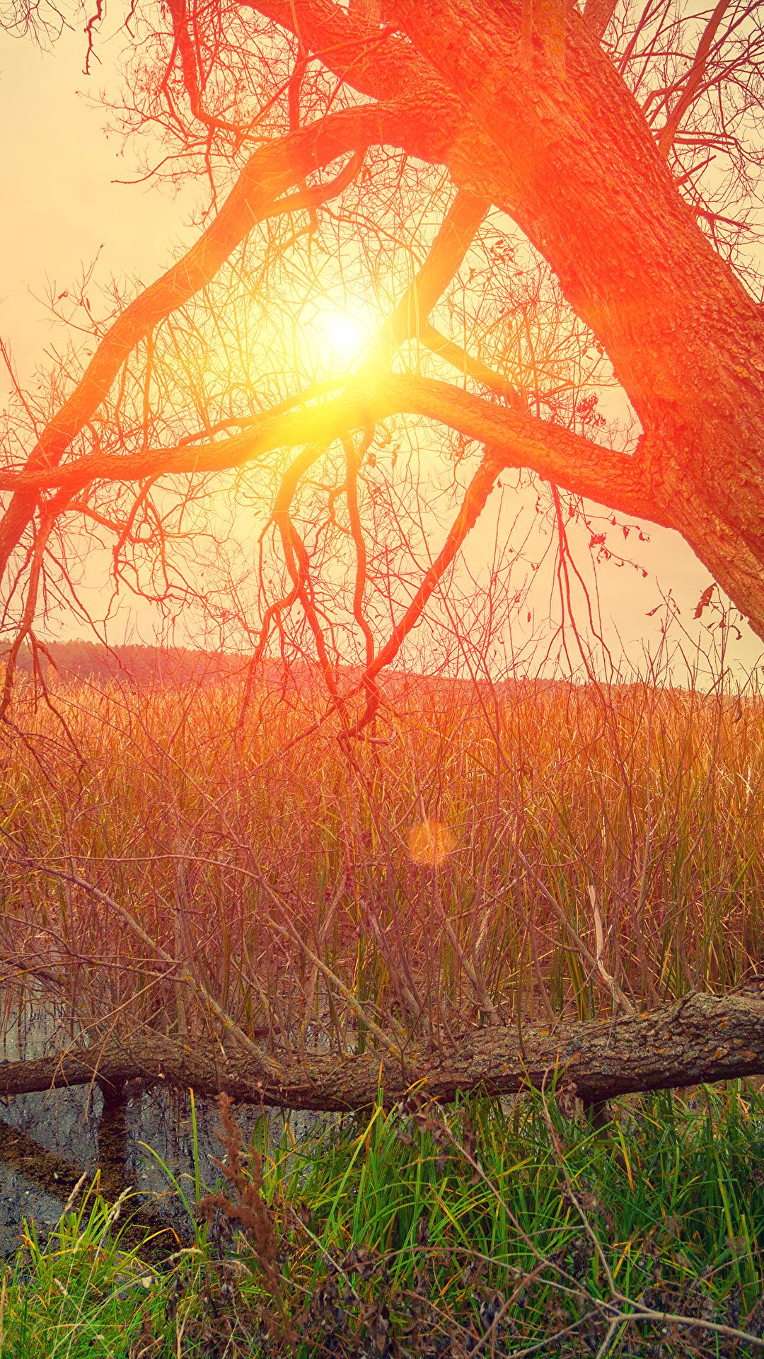 Hintergrundbilder Natur Sonne Sumpf Baumstamm Sonnenaufgänge und Sonnenuntergänge Gras 1080x1920