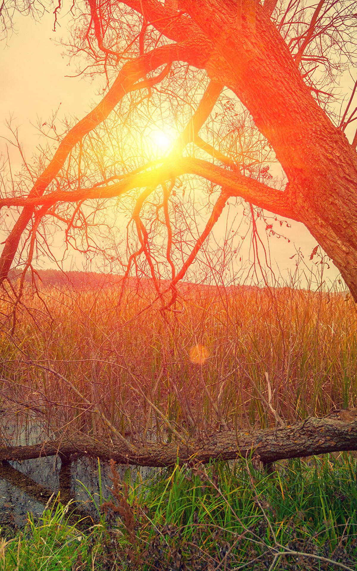 Hintergrundbilder Natur Sonne Sumpf Baumstamm Sonnenaufgänge und Sonnenuntergänge Gras 1200x1920