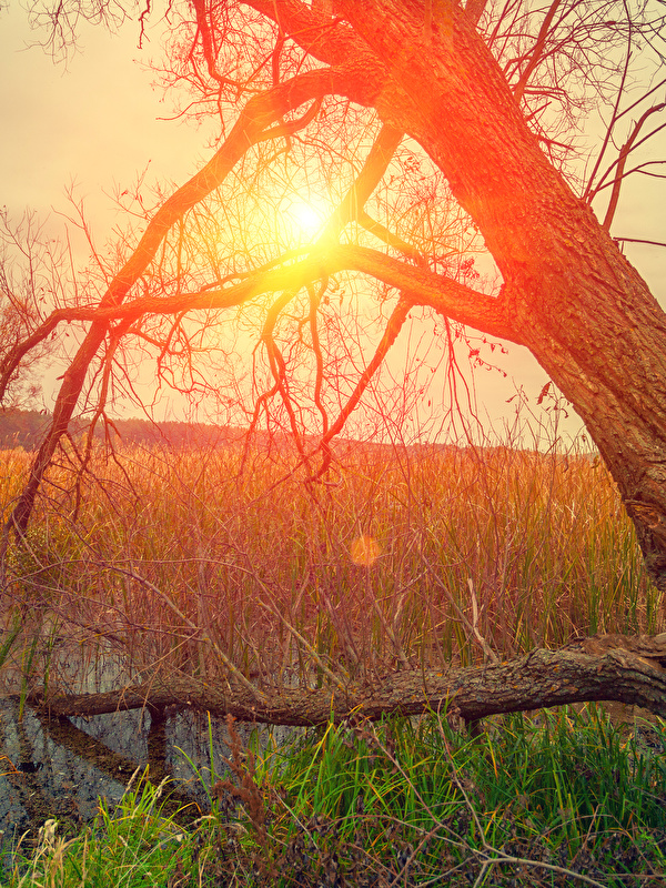 Hintergrundbilder Natur Sonne Sumpf Baumstamm Sonnenaufgänge und Sonnenuntergänge Gras 600x800